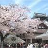 【岡崎城】桜2017!!ライトアップの時間帯は?