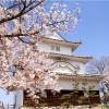 【丸亀城】桜2017の開花情報は?駐車場も要チェック!!