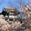 【高田城】桜2017の見頃や開花予想は?臨時駐車場について