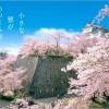 【津山城】桜2017の開花状況や見ごろについて ※岡山県