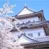 【小田原城】桜2017のライトアップや出店情報、混雑状況について