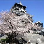 【熊本城】桜まつり2017の日程は?見ごろや開花予想も紹介!