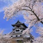【犬山城】桜2017の開花状況や混雑について