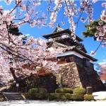【丸岡城】桜2017の開花情報やライトアップの時間は? ※福井県