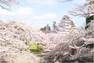 会津若松城の桜の見ごろ
