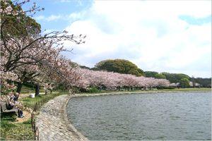 明石公園の剛之池