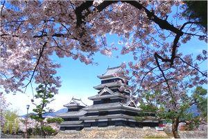 夜桜会の日程