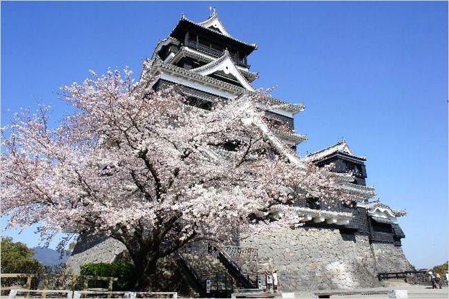 熊本城の桜2017