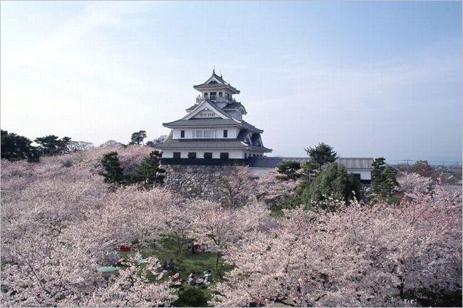 長浜城の桜2017