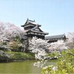 【大和郡山城】桜2017の開花情報やライトアップについて ※奈良県
