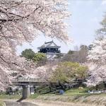 【岡崎城】桜2017の開花予想や屋台について
