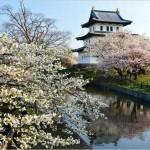 弘前城 桜2016