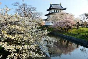 弘前城 桜2017