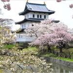 【弘前城】桜2017の見頃や開花予想について
