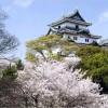 【和歌山城】桜2017の開花予想は?ライトアップや夜店情報も紹介!