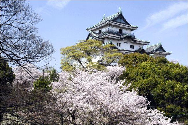 和歌山城 桜2017