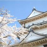 【小田原城】桜2017の開花予想や見頃について