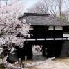 【小諸城】桜2017の開花予想や駐車場情報は?