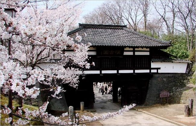 小諸城の桜