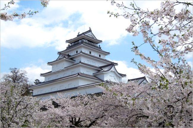 会津若松城の桜