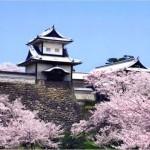 【金沢城】桜2017のライトアップの時間は?見ごろはいつ?