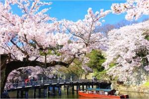 彦根城の桜まつり