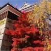上田城の紅葉2017の見頃はいつ?紅葉まつりの日程や内容はココ