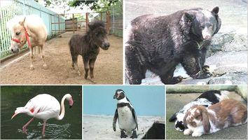和歌山公園動物園の料金